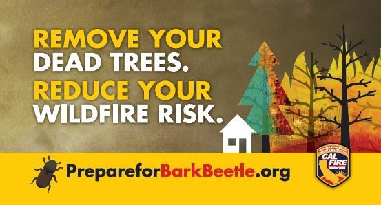 Remove Your Dead Trees Reduce Your Wildfire Risk